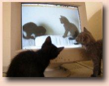 gattini_cene
